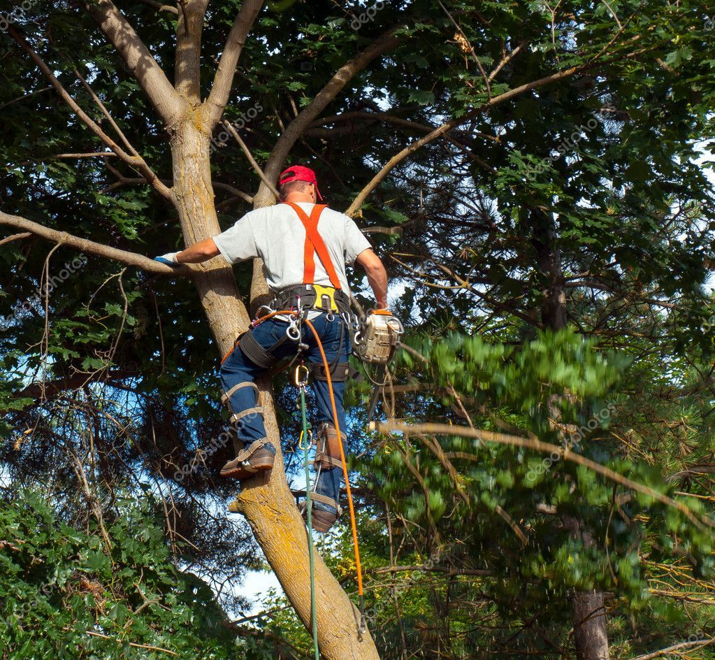 Arborist Trimming Down A Tree Stock Photo Aff Trimming Arborist Tree Photo Ad Tree Care Stock Photos Birds In Flight