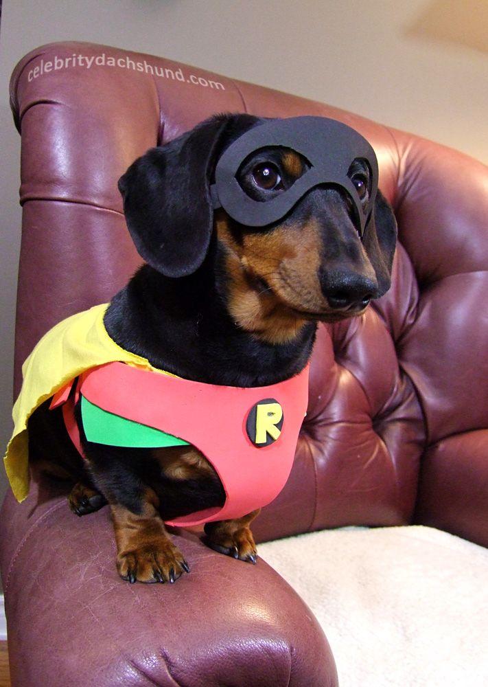 My 10 Best Dog Costumes Best Dog Costumes Dachshund Halloween