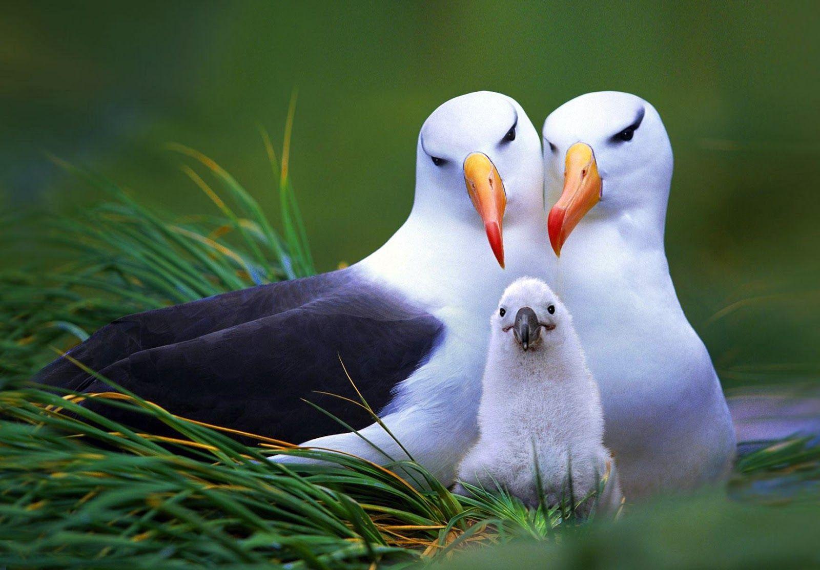 Most Beautiful Birds