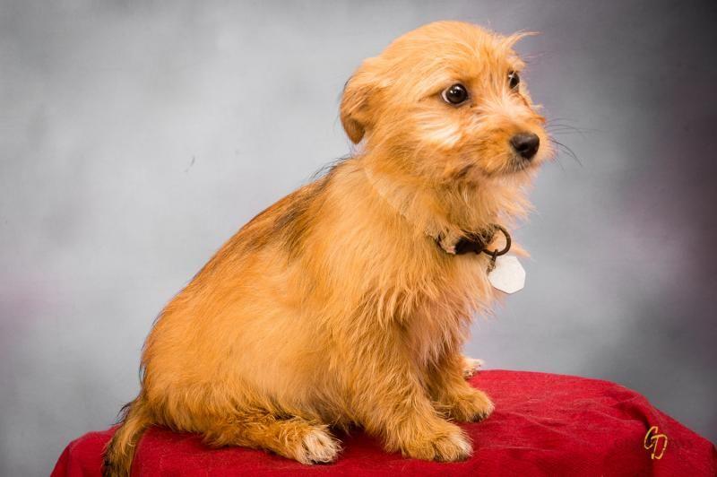 Petfinder Adoptable Dog Terrier Houma La Wiz 580888 Dog