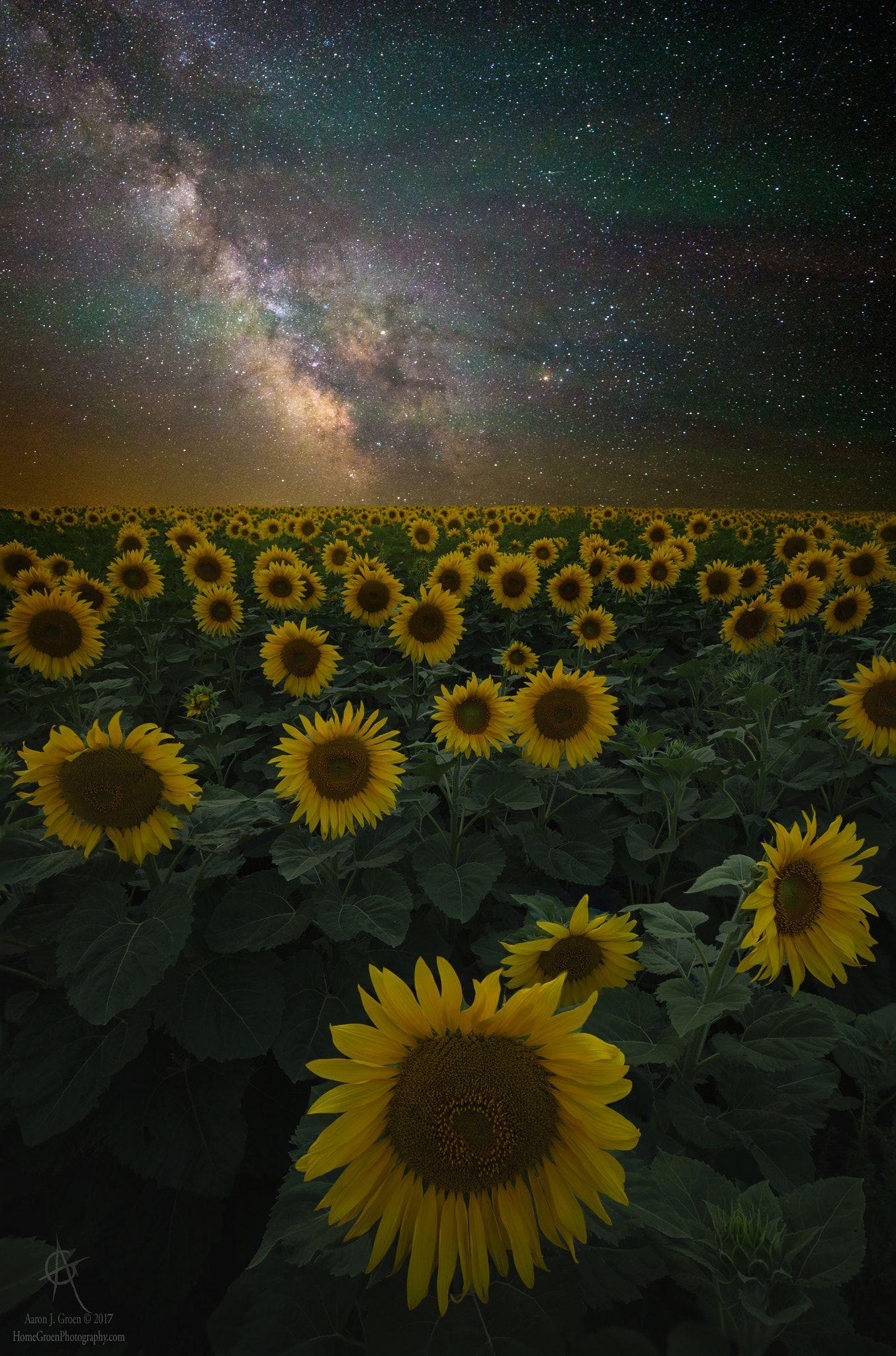 "Night of a Billion Suns - ""Night of a Billion Suns ..."