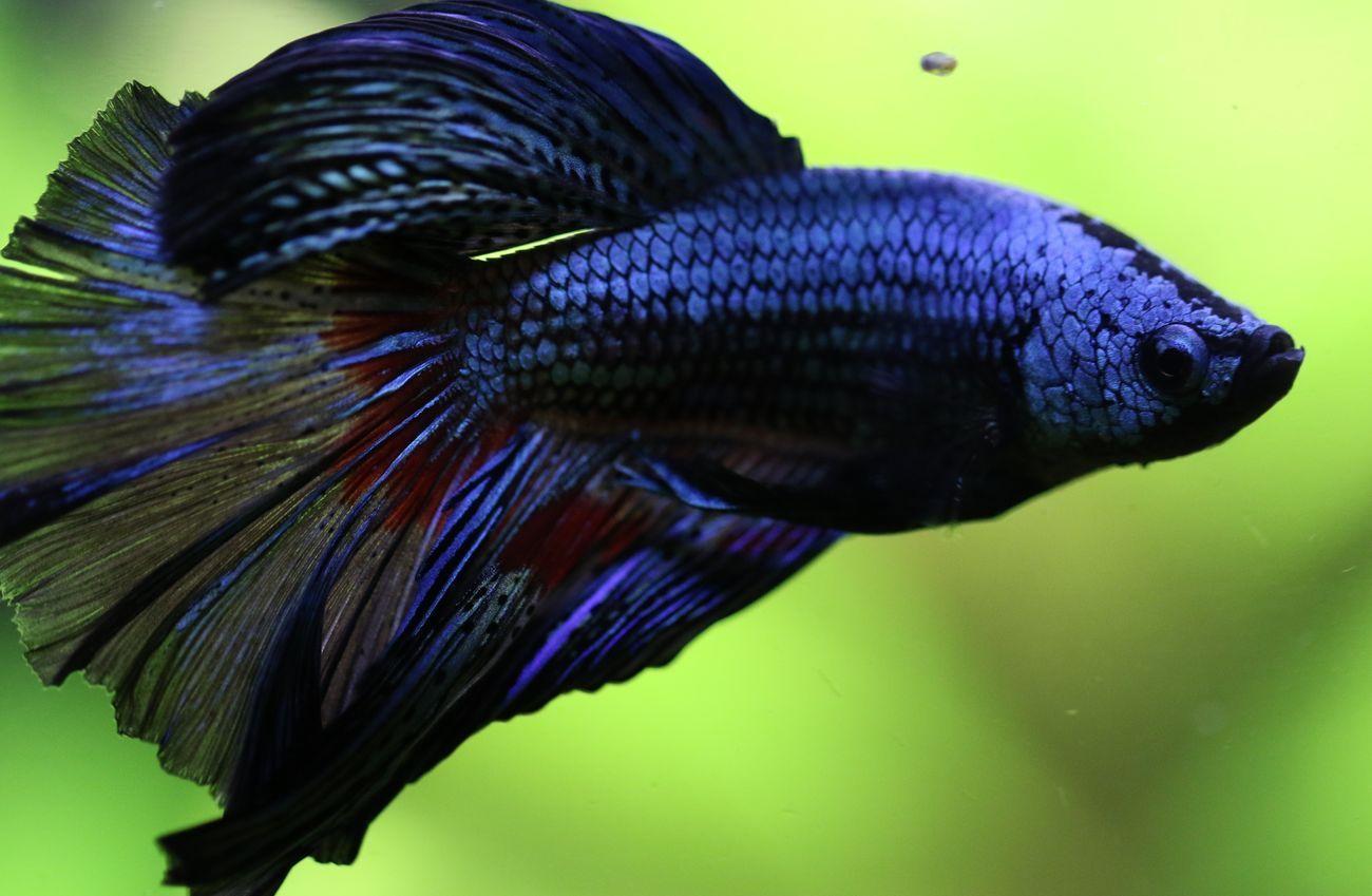 Animal Themes Animals Animals In The Wild Aquarium Aquarium Life ...