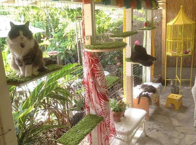 Cat Patios, Aka Catios, Are The Latest Home Trend U2014 Hereu0027s How To Get