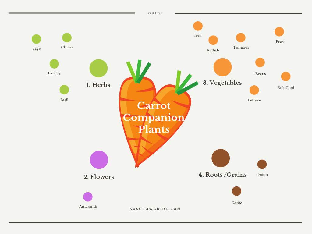 Carrot Companion Planting – With A Visual Guide 400 x 300