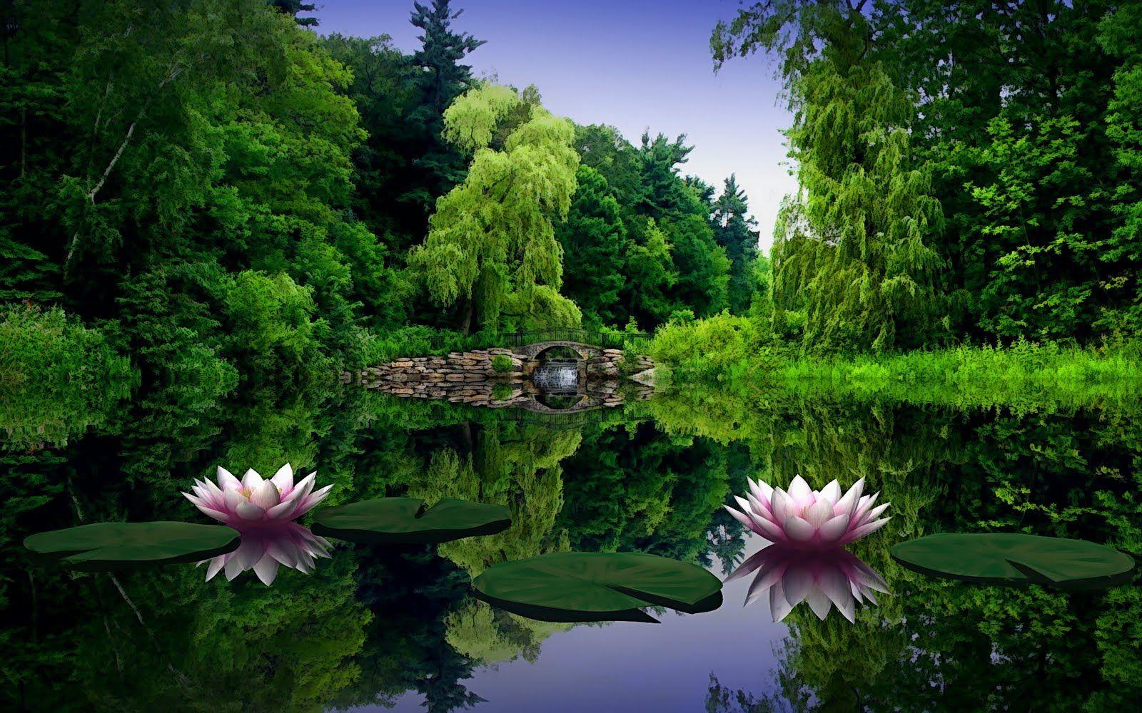 Flower ponds lotus flower meditation garden pinterest lotus flower ponds lotus flower izmirmasajfo