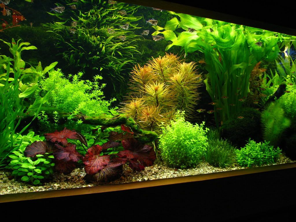 Beautiful aquarium even without the fish lol