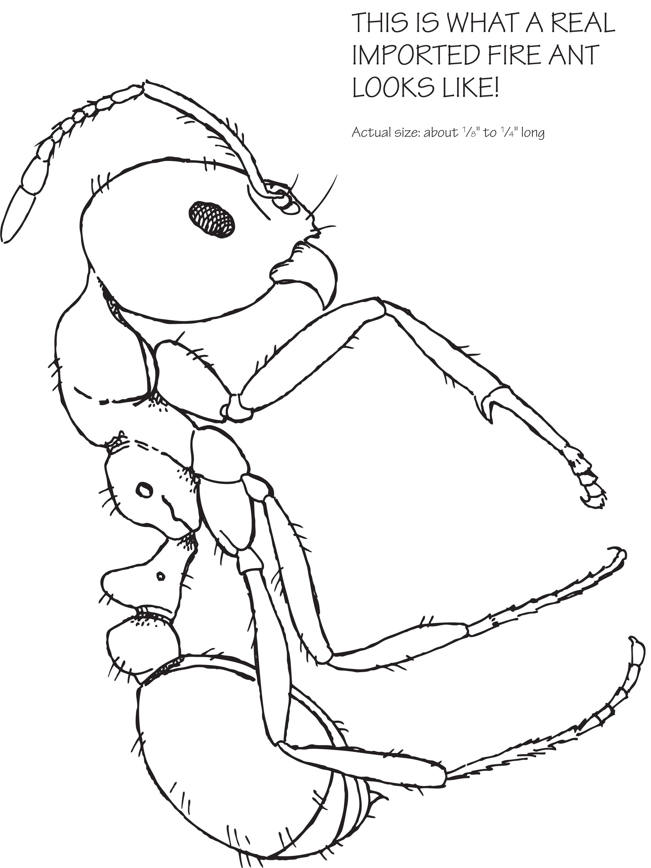 Pin On How To Kill Fire Ants
