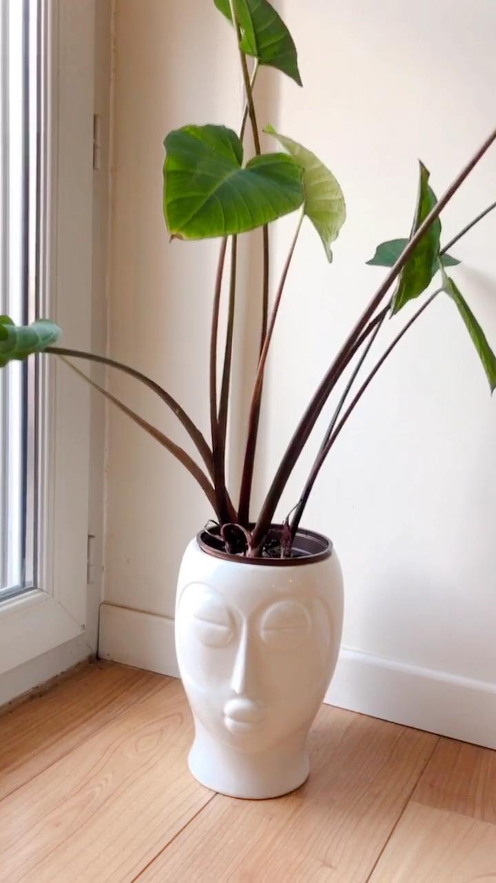 Arreglos Florales Preparados En L A Ultima Tendencia P Macetas Signifiant Hormigon Nut Casas Pero Plant Pot Design Tall Potted Plants Large Indoor Plants