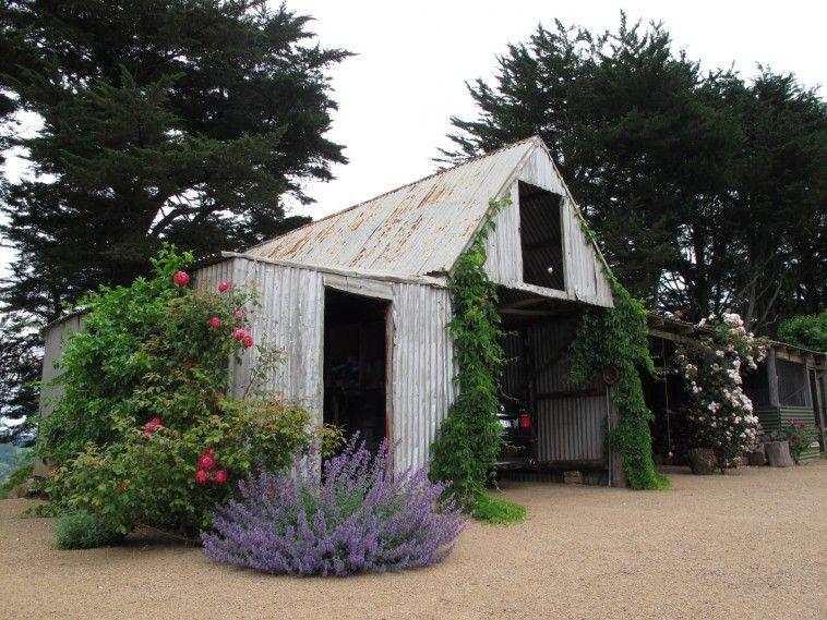 Myles Baldwyn Design   Old Tin Shed/Barn/Garage? Climbing Roses, Vines ·  Garden BuildingsGarden StructuresRose ...