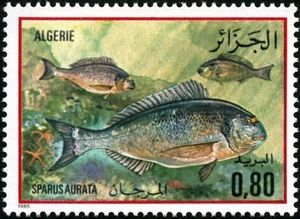 Gilt-head Bream (Sparus aurata)