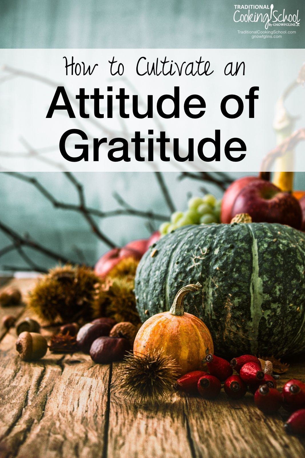 How to Cultivate an Attitude of Gratitude   Maintaining an attitude of gratefulness? That can be a challenge for anyone. Life isn't always easy, but we can always choose to be grateful, no matter what our circumstances. Here are four ways in which I'm working to maintain an attitude of gratitude during this Thanksgiving season.   TraditionalCookingSchool.com