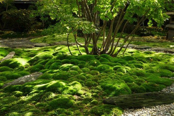Moss Gardens of Japanbeautiful artistic gardens! 苔の庭 - 株式 - paisaje jardin