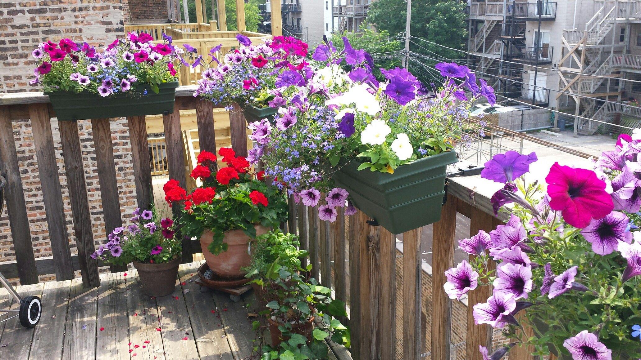 Pinterest Saved My Petunias! Petunias, Garden containers
