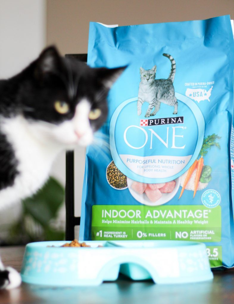 How to Help Your Cat Healthier with Walmart Purina