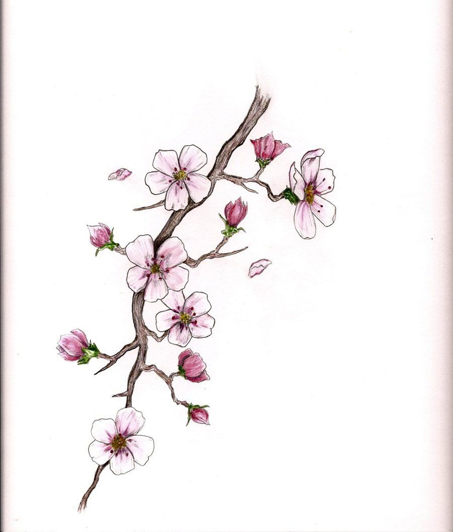 cherry blossom drawing - 736×864
