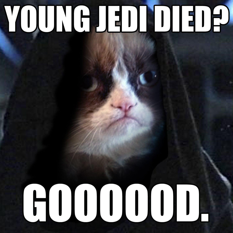Darth Grumpius Funny Cat Memes Star Wars Star Wars Humor