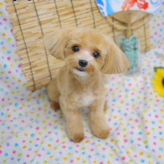 Pin By Pamela Goddard On Cute Puppies And Dogs Dogs Cute Puppies Puppies