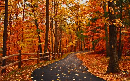 Pretty Woods Scenery Autumn Road Forests Nature