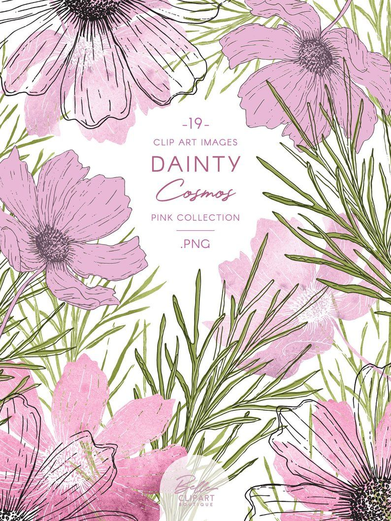 Cosmos Flower Clipart Pink Watercolor Illustration Line Art Line Art Flower Clipart Watercolor Illustration