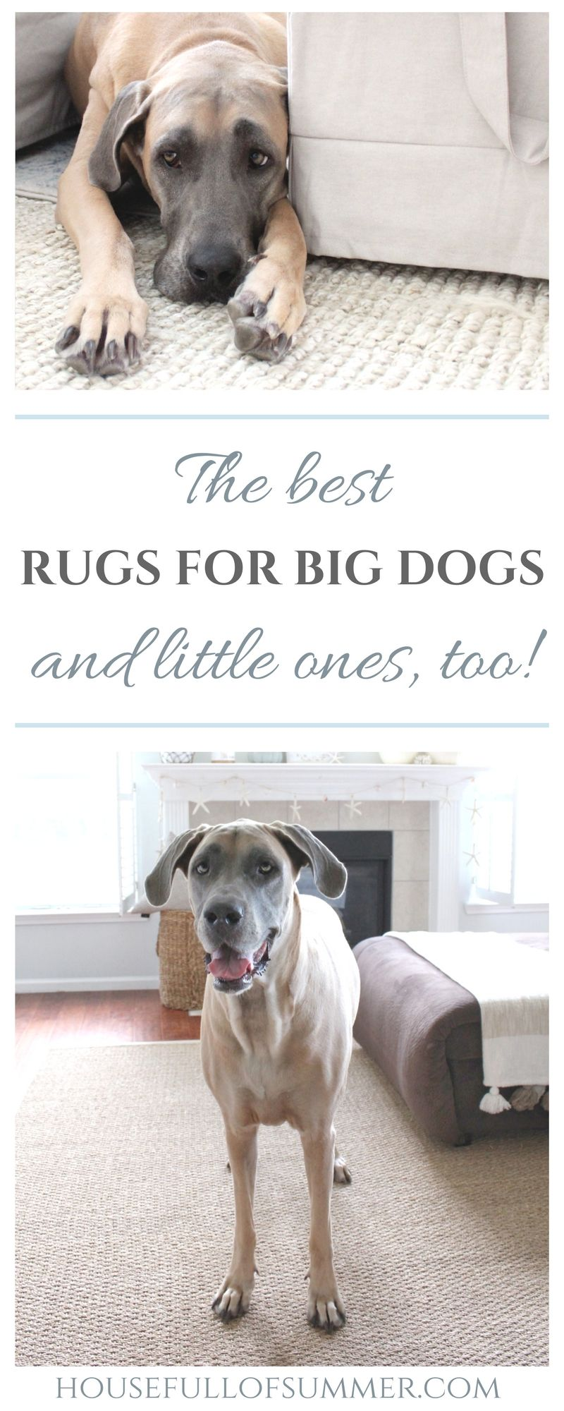 The Best Rugs for Big Dogs (and little ones, too!) Cool