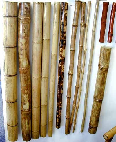 Bamboo curtain rods and other bamboo facts.