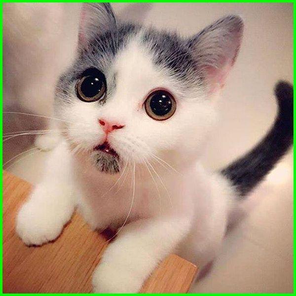 Gambar Kucing Ekspresi Lucu Foto Kucing Lucu Editan Foto Kucing Ekspresi Lucu Gambar Ekspresi Kucing Lucu Gambar Kuci Kittens Cutest Cute Animals Baby Cats