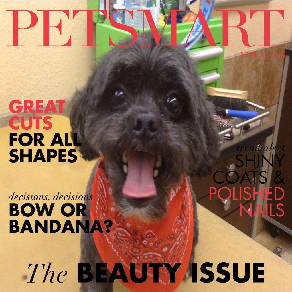 Heres my pet photo animal photo pets dogs
