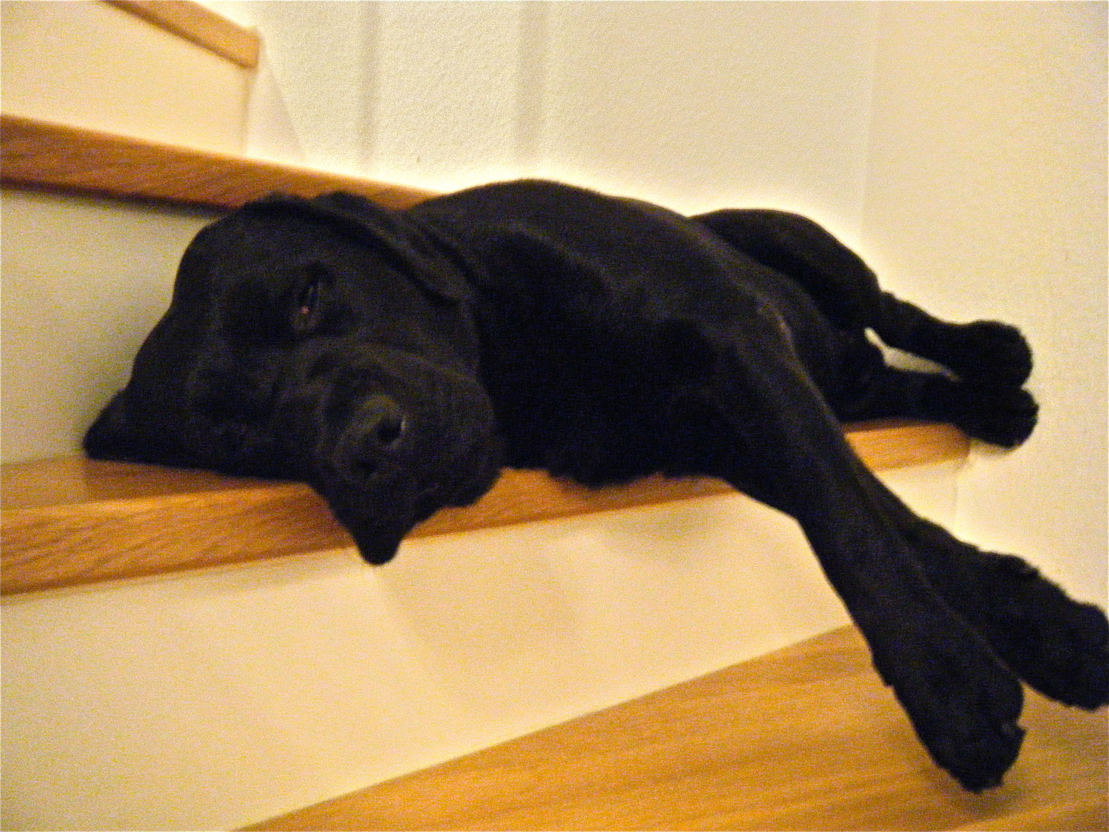 What is the best way to house train a puppy that has spent all his life outdoors?