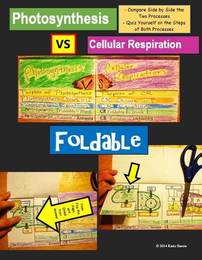 Photosynthesis cellular respiration tpt science lessons photosynthesis vs cellular respiration foldable it compares side by side the purpose of each process where they occur what the equation is for each one ccuart Image collections