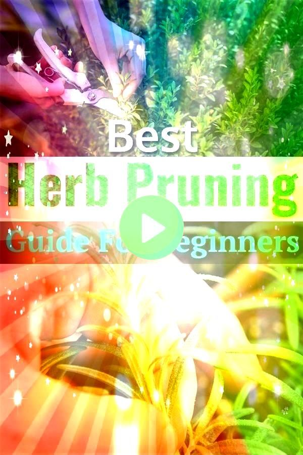Herb Pruning Guide For Beginners Best Herb Pruning Guide For Beginners  yourebeautiful Discover all the new arrivals To order plz whats app 01229796666DM Discover al...