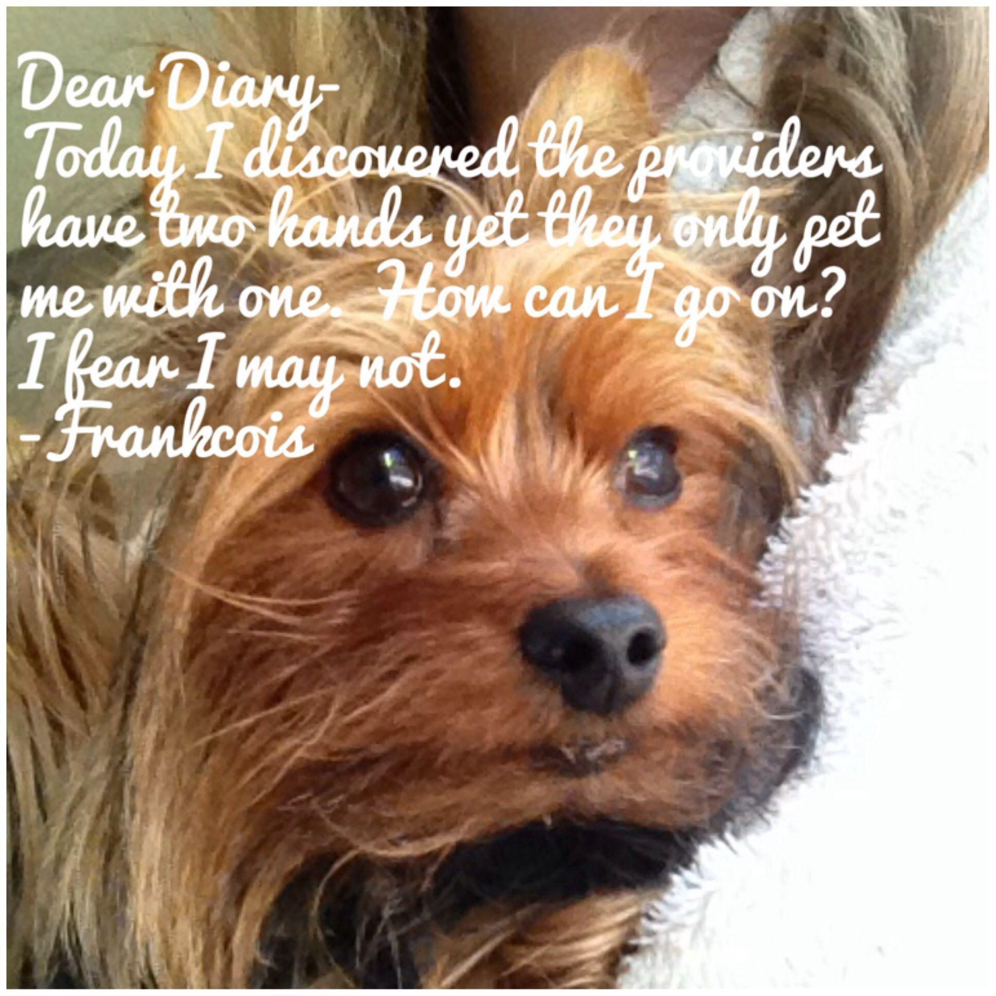 Frankcois inner thoughts. Dear Diary yorkie style. Dog meme.