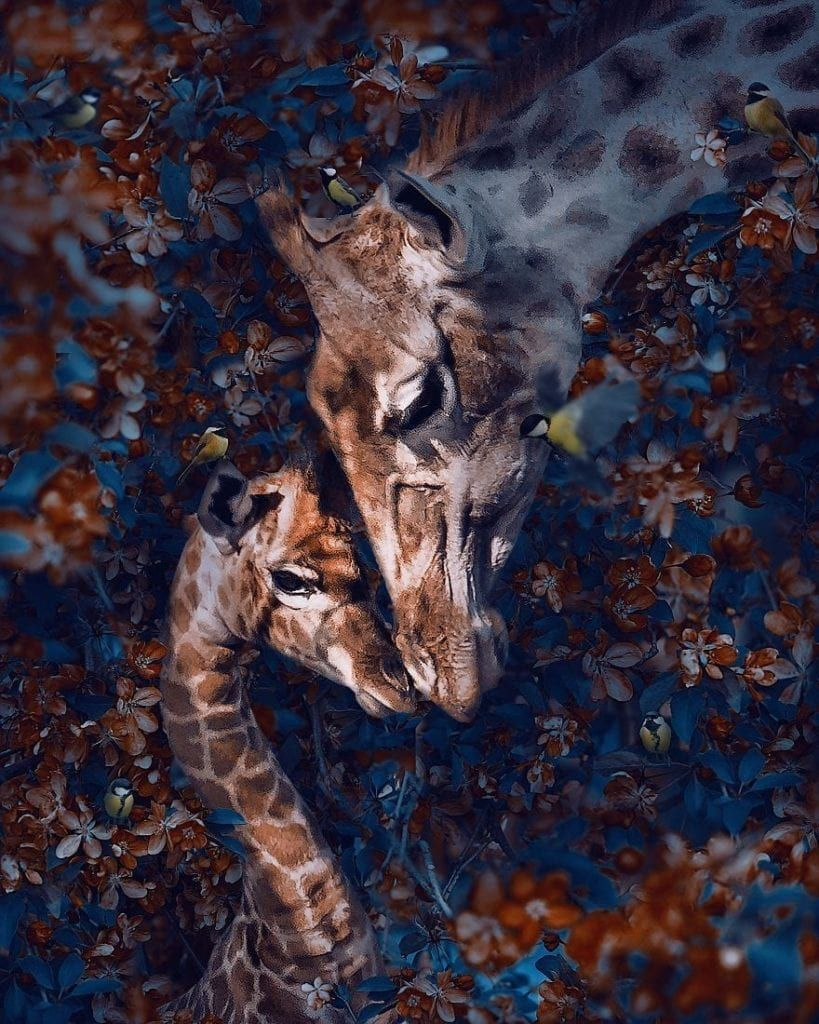 Andreas Häggkvist Creates Unbelievably Beautiful Animal