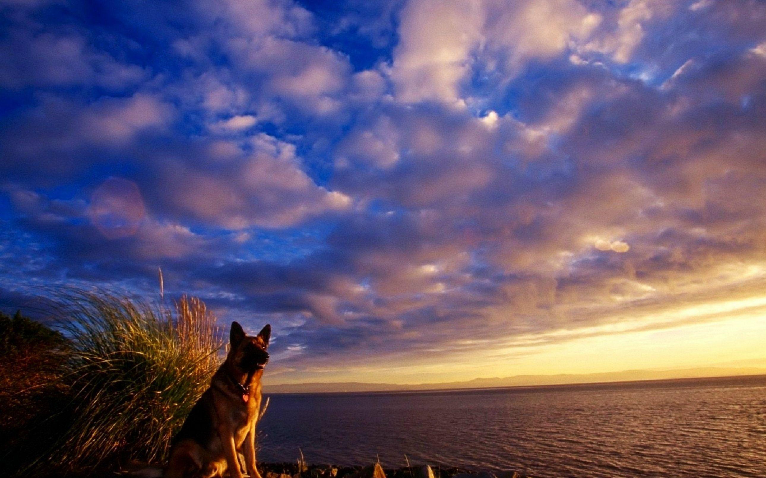 Baby German Shepherd Wallpaper | wallpapers | Породы собак ...