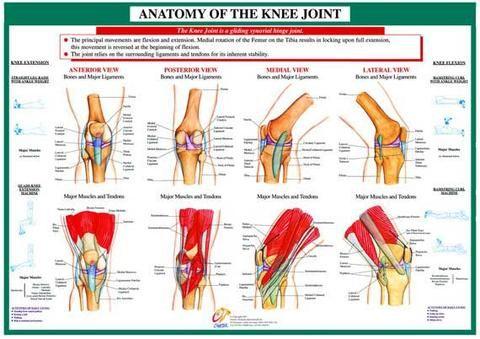 Knee Diagram Chart Wiring Diagram
