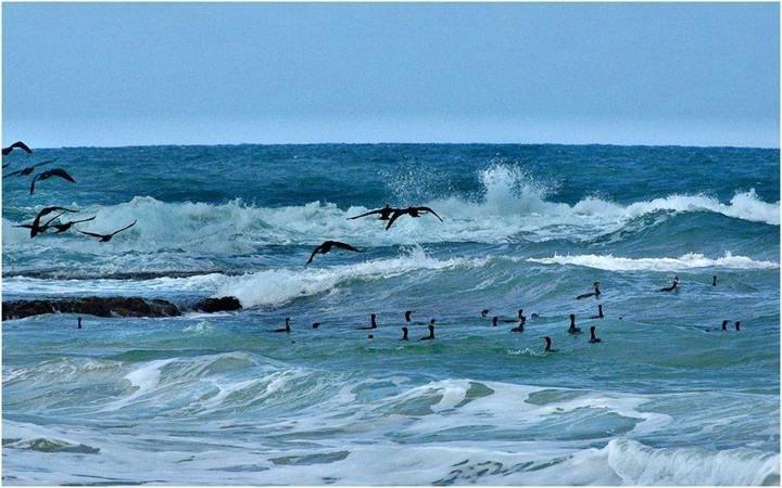 Beautiful Ocean Waves Labels Nature , Ocean , Photos , Water