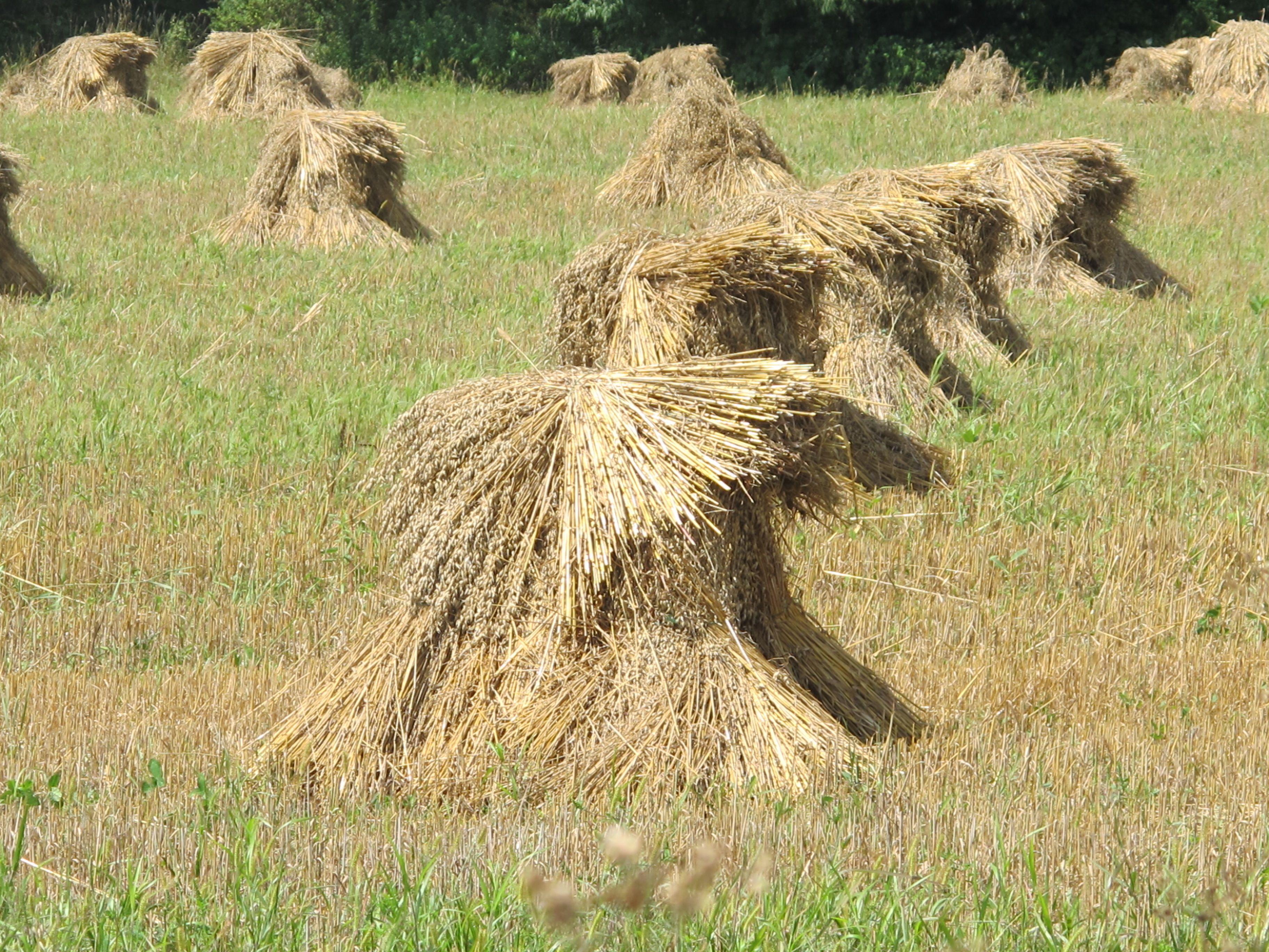 amish bales of hay