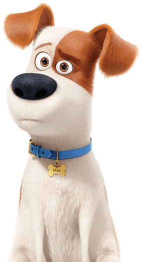 Max A Terrier Dog Pokes His Head Up From Behind A Window Secret Life Of Pets Little Pets American Eskimo Dog