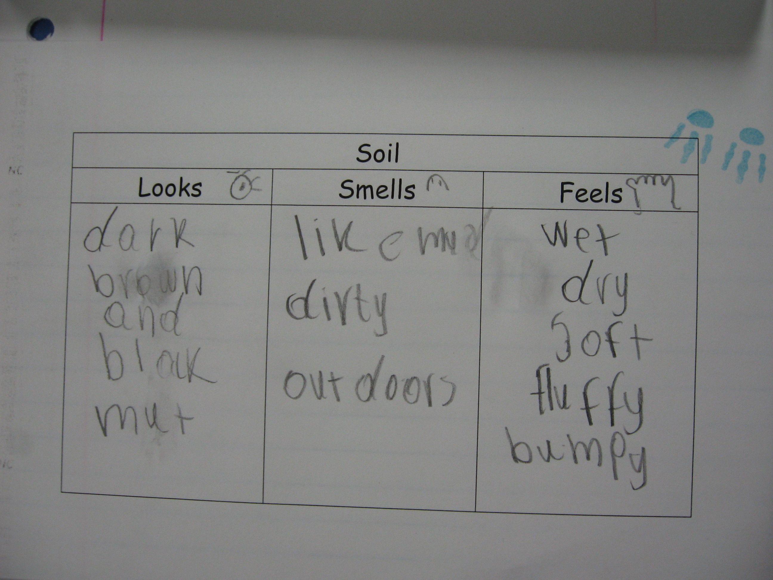Soil Description Graphic Organizer