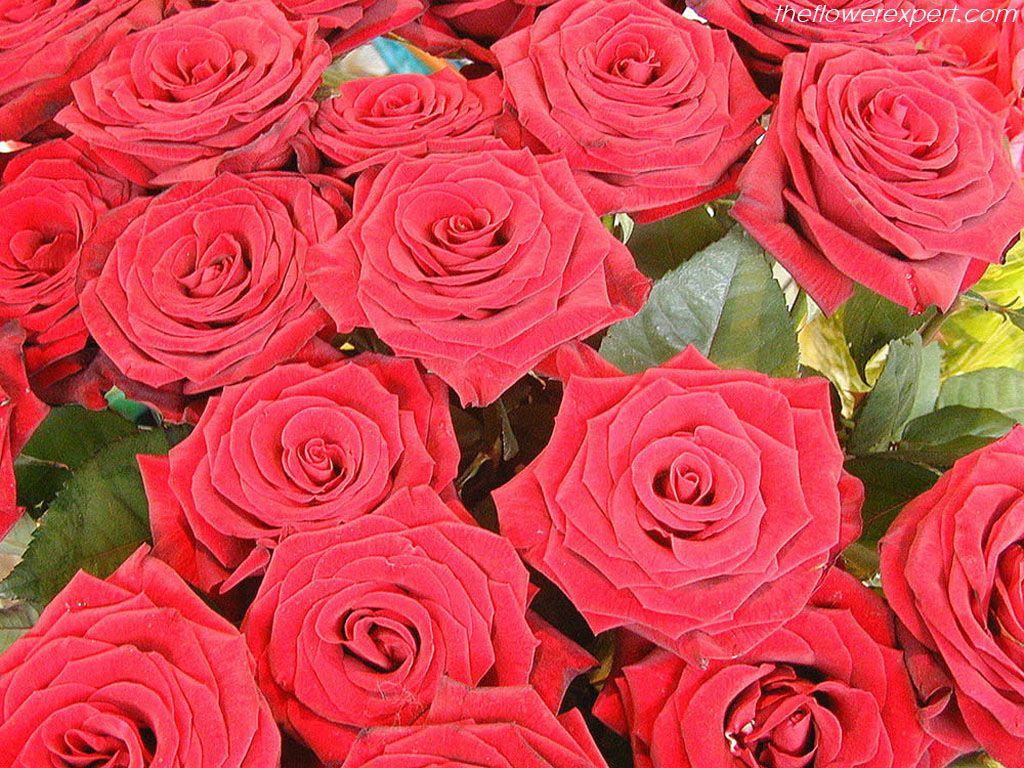 Flower wallpaper from our stores pickupflowers the flower exclusive wallpapers on beautiful flowers the flower expert izmirmasajfo
