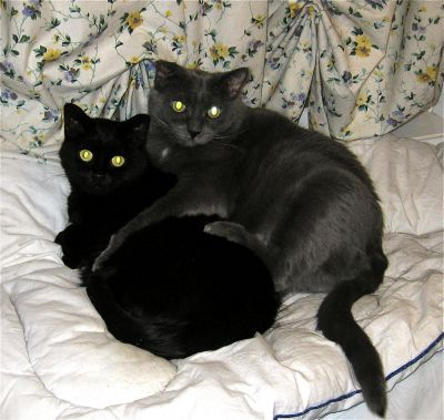 Buster and Soot. Two fine black cats.