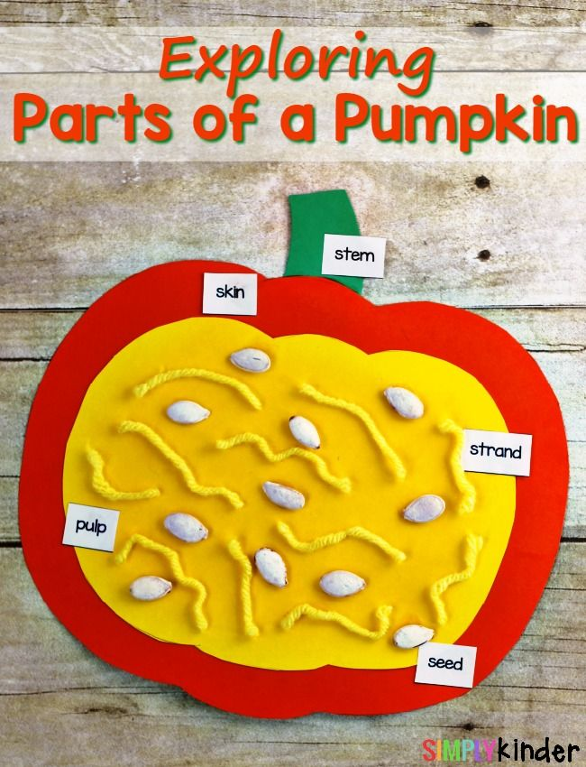 Exploring the Parts of a Pumpkin #pumpkincraftspreschool