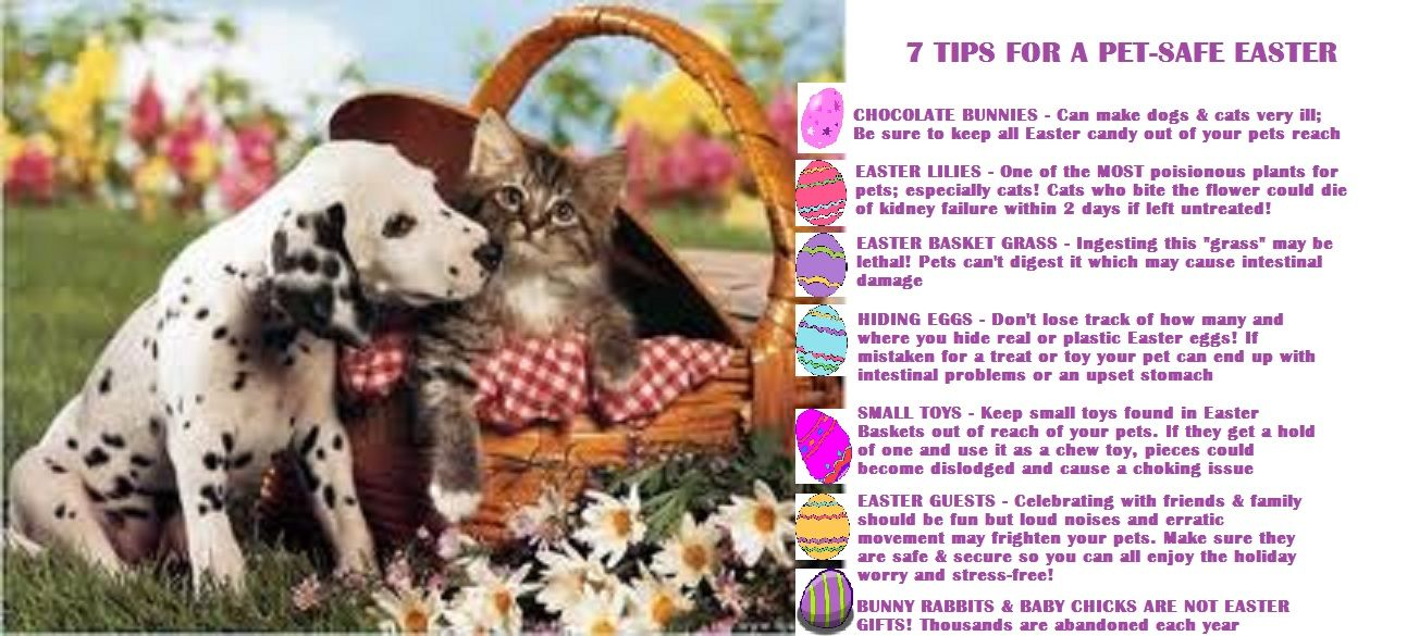 7 Easter Safety Tips For Your Pets Pet Safety Easter Pets Pet