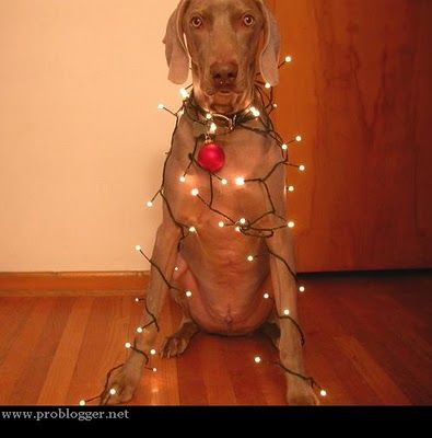 Wrapped In #Christmas #Lights