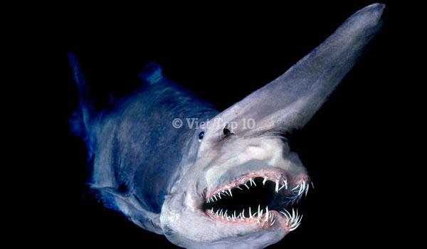 top 15 loài động vật có hàm răng đáng sợ nhất hành tinh - việt top 10 - việt top 10 net - viettop10