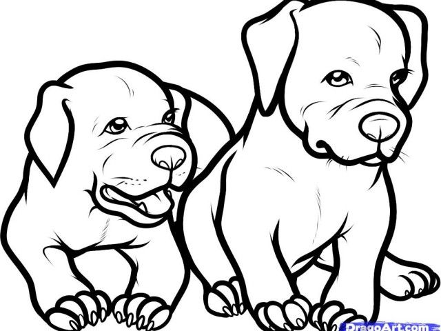 How To Draw A Pitbull Puppy Step By Step | Wood Burning Shit ...