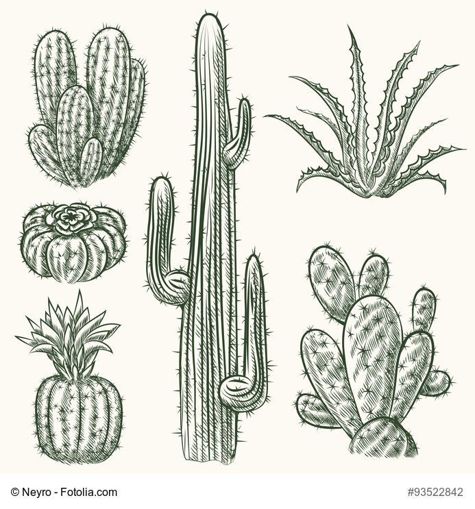 Hand Drawn Vector Cactus Set. Plant Mexican Nature Flora Exotic Illustration | Cactus ...