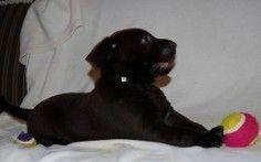 Labrador Breeder Labrador Puppies For Sale Rosebud Texas 254 366 0658 This Is Where Our New Pupp Labrador Breeders Labrador Puppies For Sale Labrador Puppy