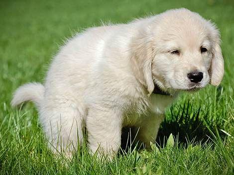 Durchfall Beim Hund Diese 8 Hausmittel Schaffen Abhilfe In 2020 Durchfall Beim Hund Hunde Hundeschule