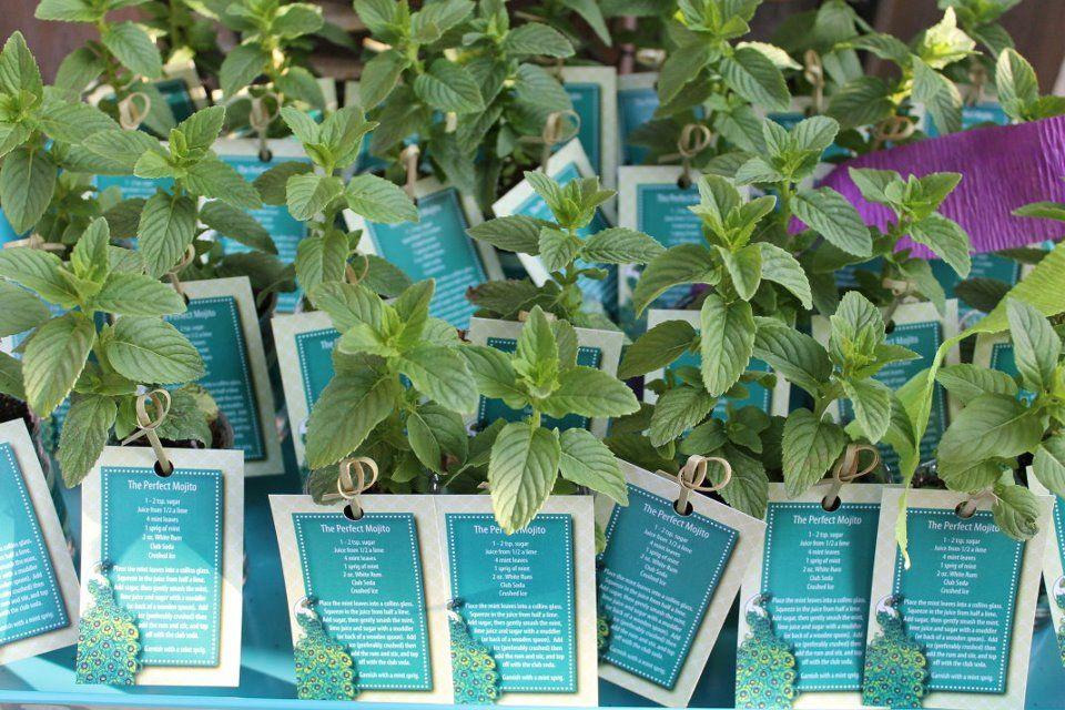 The Favour Mini Mojito Kit... tiny mint plant inside a