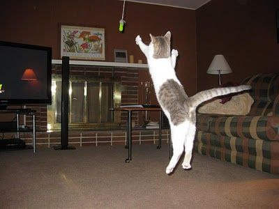 Flying cat pictures and video of my explore ceiling fans the he and more mozeypictures Images